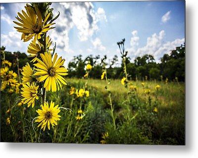 Yellow As The Sun Metal Print by CJ Schmit