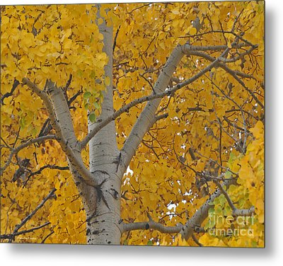 Yellow Aspen Autumn Tree Grand Teton National Park Metal Print