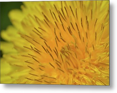 Metal Print featuring the photograph Yellow Beauty by JD Grimes