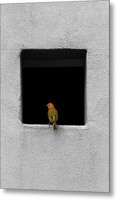 Yellow Birdie On The Window Sill Metal Print by Tracie Kaska