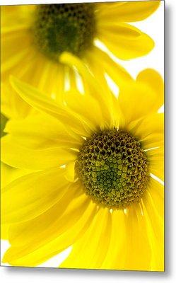 Yellow Bright Yellow Metal Print by Brad Rickerby
