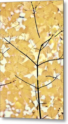 Yellow Brown Leaves Melody Metal Print by Jennie Marie Schell