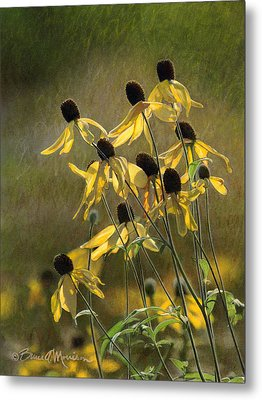 Yellow Coneflowers Metal Print by Bruce Morrison