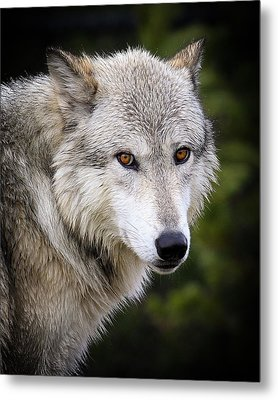 Metal Print featuring the photograph Yellow Eyes by Steve McKinzie