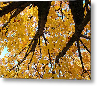 Yellow Fall Trees Prints Autumn Leaves Metal Print by Baslee Troutman