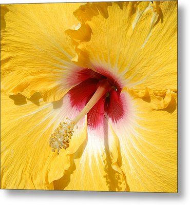 Metal Print featuring the photograph Yellow Fellow by Cindy Manero