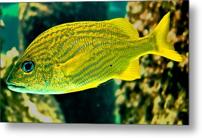 Yellow Fellow Metal Print by DigiArt Diaries by Vicky B Fuller
