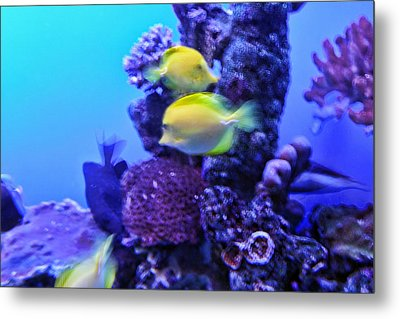 Yellow Fish With Purple Coral Metal Print by Linda Phelps
