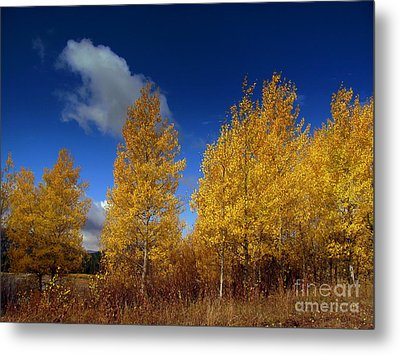 Metal Print featuring the photograph Yellow Flash by Irina Hays
