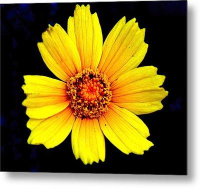 Yellow Flower Metal Print by Marty Koch