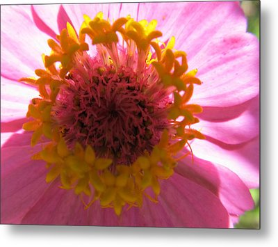 Metal Print featuring the photograph Yellow Flowerettes Around by Tina M Wenger