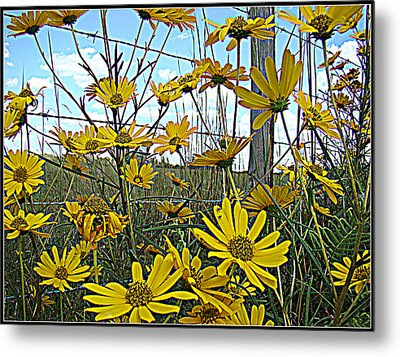 Metal Print featuring the photograph Yellow Flowers By The Roadside by Alice Gipson