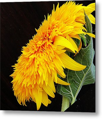 Metal Print featuring the photograph Yellow Flowers by Elvira Ladocki