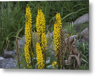 Yellow Flowers Metal Print by Michel DesRoches