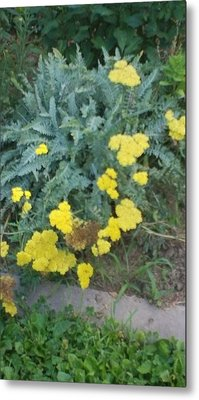 Yellow Garden Flowers And Green Ferns Metal Print by Thelma Harcum