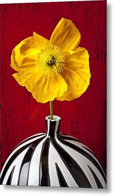 Yellow Iceland Poppy Metal Print by Garry Gay