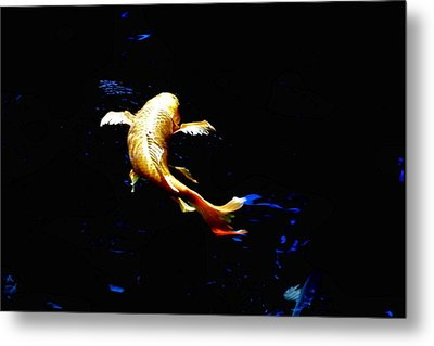 Yellow Koi Metal Print by Don Mann