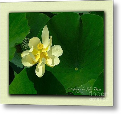 Yellow Lotus Blossom In Mississippi  Metal Print by Julie Dant