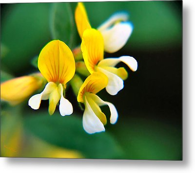 Metal Print featuring the photograph Yellow Macro by Wendy McKennon