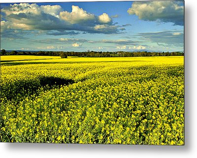 Yellow Mellow Metal Print