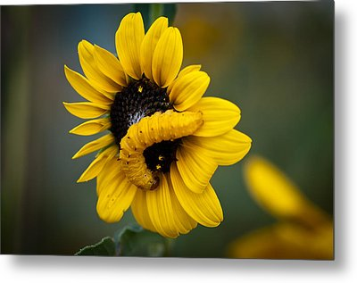 Metal Print featuring the photograph Yellow On Yellow by Monte Stevens
