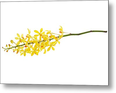 Yellow Orchid Bunch Metal Print by Atiketta Sangasaeng