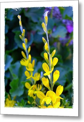 Metal Print featuring the photograph Yellow Plumes by Judi Bagwell