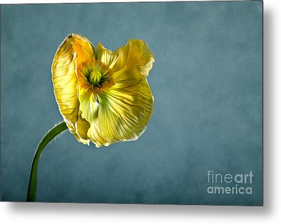 Yellow Poppy Metal Print by Nailia Schwarz