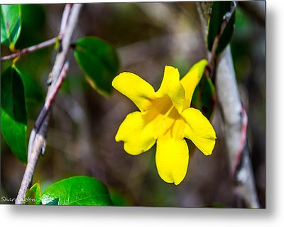 Metal Print featuring the photograph Yellow by Shannon Harrington