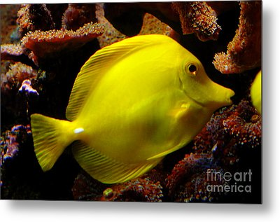 Yellow Tang Metal Print by Pravine Chester