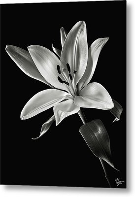Metal Print featuring the photograph Yellow Tiger Lily In Black And White by Endre Balogh