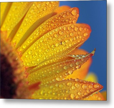 Yellow Wild Flower Metal Print by the*Glint