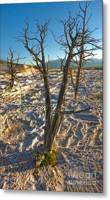 Yellowstone National Park - Minerva Terrace - Dead Tree Metal Print by Gregory Dyer