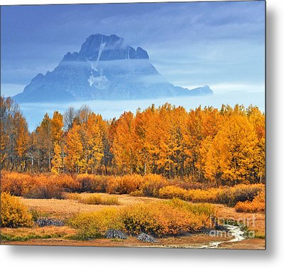 Yelow And Orange Autumn Grand Teton National Park Metal Print