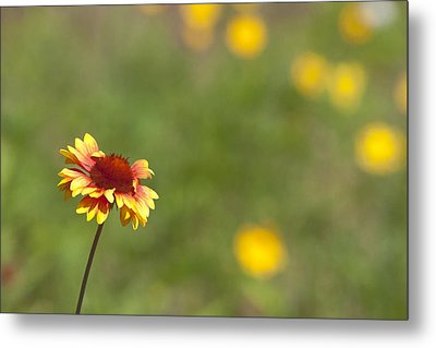Metal Print featuring the photograph Yep...a Flower by John Crothers