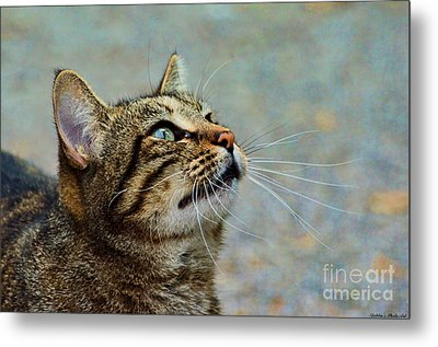 Yes I Am A Pretty Kitty Metal Print by Debbie Portwood