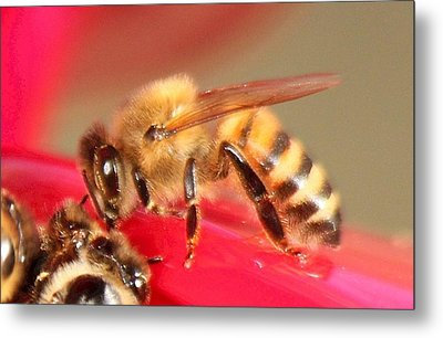 Yet Another Bee Metal Print