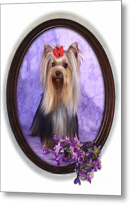 Yorkie With Violets Metal Print by Maxine Bochnia
