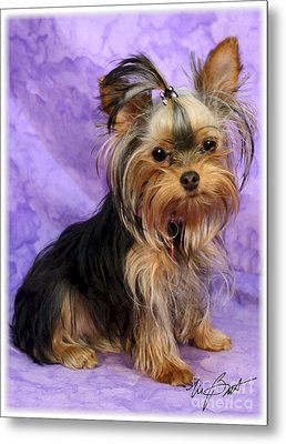 Yorkshire Terrier Pup Metal Print by Maxine Bochnia