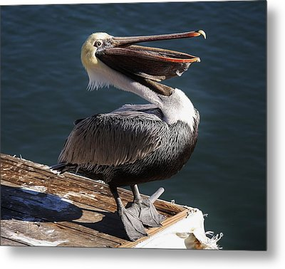 You Are So Funny Metal Print by Paulette Thomas