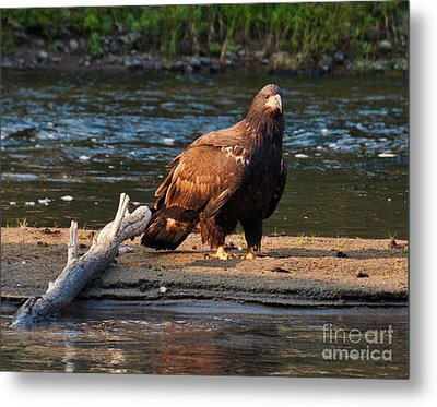 Metal Print featuring the photograph Young And Wise by Cheryl Baxter