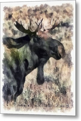 Metal Print featuring the photograph Young Bull Moose by Clare VanderVeen