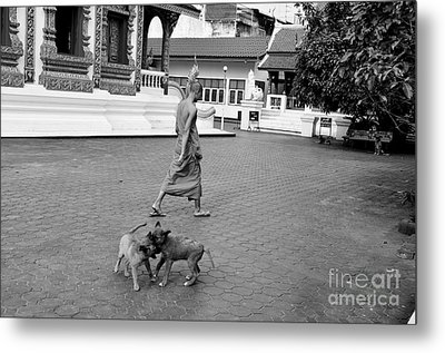 Young Dogs Metal Print by Dean Harte