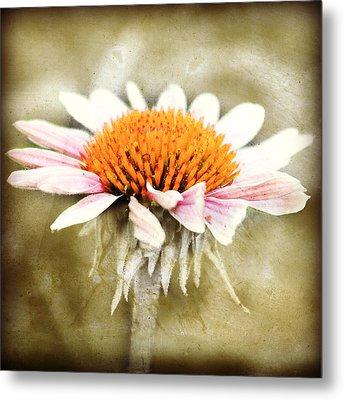 Young Petals Metal Print by Julie Hamilton