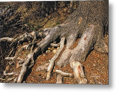 Your Roots Are Showing Metal Print by Donna Blackhall