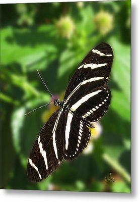 Zebra Heliconian Butterfly 1 Metal Print