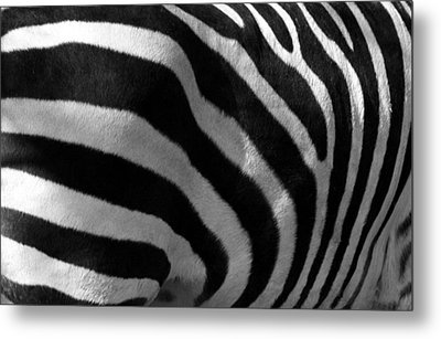 Metal Print featuring the photograph Zebra Stripes by Cindy Haggerty