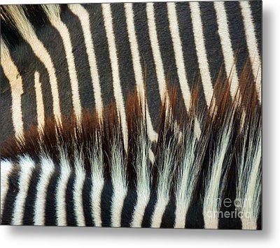 Zebra Stripes Metal Print by Methune Hively