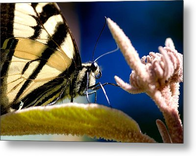 Metal Print featuring the photograph Zebra Swallowtail by Scott Holmes