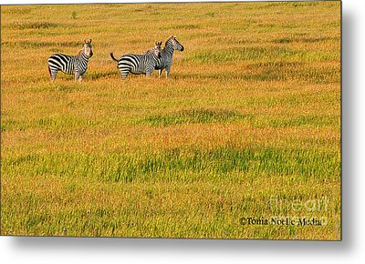 Metal Print featuring the photograph Zebras by Tonia Noelle